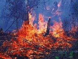 Государство самоустранилось от тушения лесных пожаров