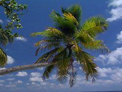 Грабитель напал на кассира с пальмой в руках