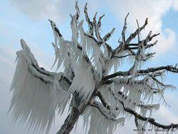 Последствия ледяных бурь