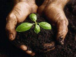 Разрушение почв может привести человечество к мировому голоду