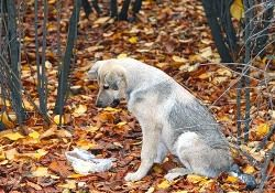 Бродячих собак вывезут в провинцию