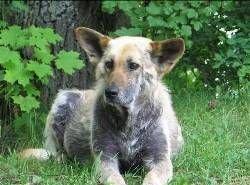 Итальянка оставила 1,5 миллиона евро в наследство бездомным собакам