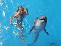 Дельфины — вовсе не те, за кого мы их принимали