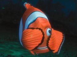 """Мультфильм \""""В поисках Немо\"""" поставил рыб-клоунов на грань вымирания"""