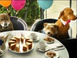 Рестораны и кафе для собак