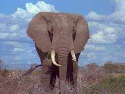 Национальный парк Шри-Ланки пополнился восемью слонами