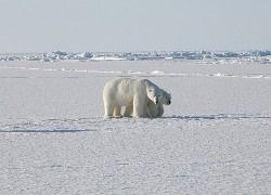 Эксперты установили, что Арктика полностью растает к 2070 году