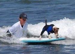 В Калифорнии прошли соревнования по дог-серфингу