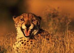 Африка манит туристов из России и рассчитывает на инвестиции