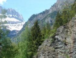 От глобального потепления деревья уходят в горы
