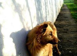 Укусы бездомных собак и понос – главные угрозы для здоровья туристов