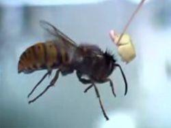 Креативщики Samsung обстреляли насекомых сладостями