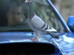 Жесткий рекламный ролик Subaru Impreza WRX STi
