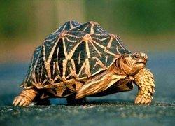 В ОАЭ строят родильные дома для черепах