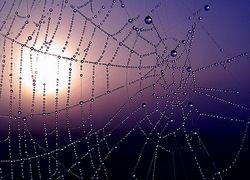 Голодные пауки плетут самые смертоносные паутины