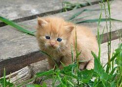 Кошки способствуют развитию экземы у детей