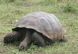 Черепаха за 2 недели обошла 3 города