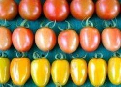 ООН установила международный стандарт для помидоров