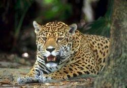 Вымерший мир защищает вымирающий