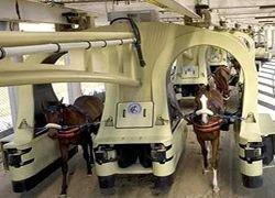 Турки построили железную дорогу для лошадей