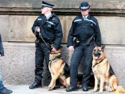 Британских служебных собак обучат входить в дом мусульман