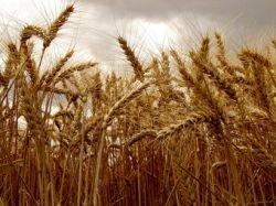 Эксперты говорят о дальнейшем росте цен на продукты питания