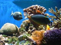 Ученые: уровень кислотности океанов растет