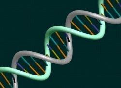 Японские ученые впервые создали искусственную ДНК