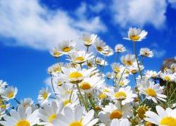 Топ-7 самых лечебных трав