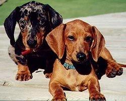 Рейтинг самых агрессивных собак
