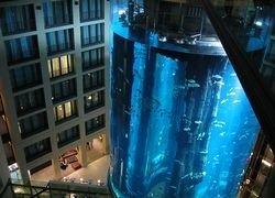 Самый большой аквариум в мире принимает первых жителей