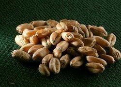 В России будет создана крупная госкомпания по торговле зерном