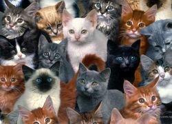 Суд обязал голландку избавиться от 50 ее кошек