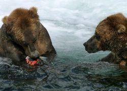 Россияне не экономят воду и моются, как заведенные