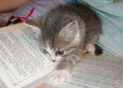 Читайте эффективнее