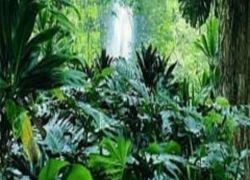 Новое развлечение для туристов на Ямайке