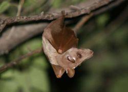 Британка «приютила» детеныша летучей мыши в бюстгальтере