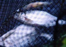 Виктор Зубков хочет сделать рыбу доступнее для народа
