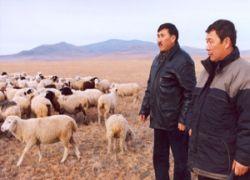 В Бурятии продолжается падеж скота