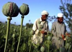 За наркотрафиком в Афганистане и Косово стоит ЦРУ
