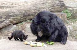 Лучшие друзья: кошка и медведь