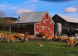 Питерская молочная ферма отказалась от космических планов