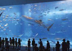 Открылся крупнейший в Германии океанариум