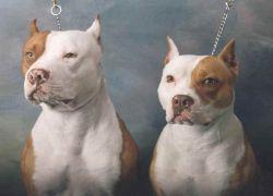 В Сеуле ожидают рождения щенков - клонов мертвой собаки