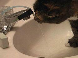 Самодельный автоматический кран для кошек