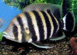 Популярный сорт рыбы оказался вредным для здоровья человека
