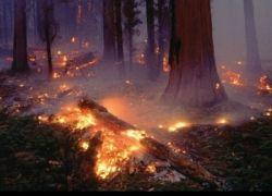 Пожары в Хабаровском крае и Якутии беспокоят экологов