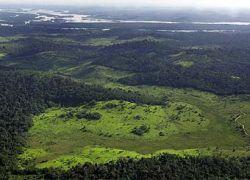 Лесам Земли предсказали скорое уничтожение
