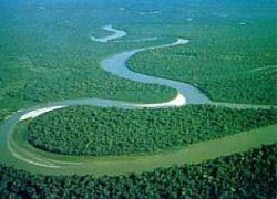 На Амазонке нашли плантации марихуаны