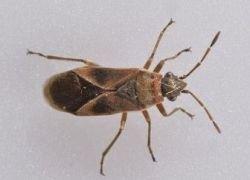 Странных насекомых влечет музей естественной истории в Лондоне